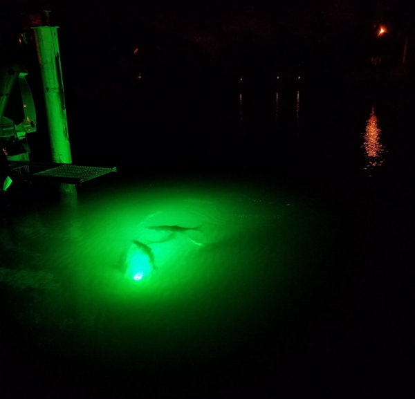 alumiglo dockpro 5000 led dock light tarpon