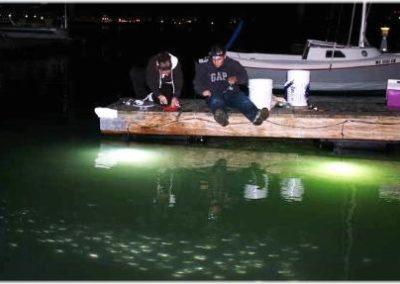 gallery fishing lights 1