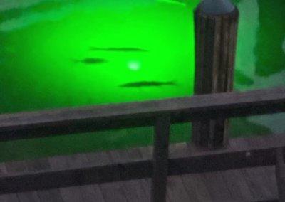 alumiglo dockpro 12000 underwater dock light herrity2.png
